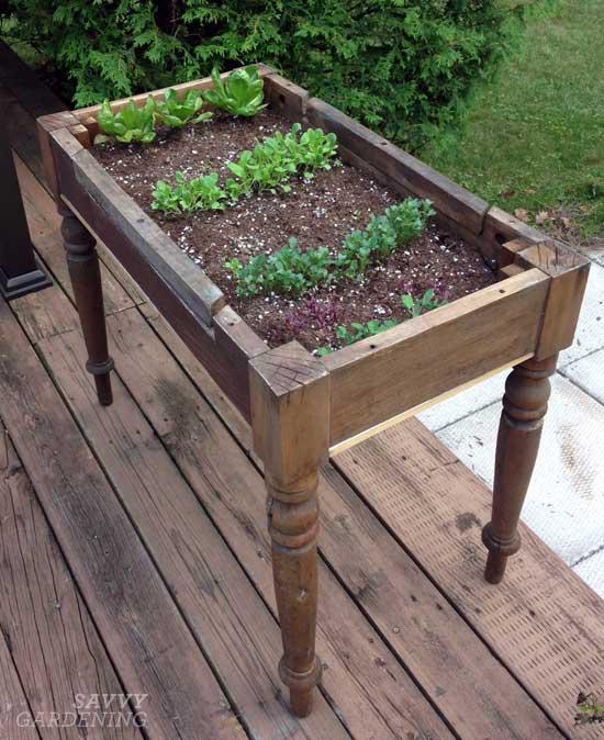 lettuce table